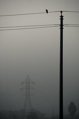 Pole Dancer (AvikBangalee) Tags: blackandwhite tree bird silhouette fog landscape wire post cable layers powerline dhaka crow minimalism powercable bangladesh bnw electricpost powerdistribution bashundhara electricsupply avikbangalee