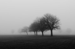Ethereal (Callum Bell) Tags: trees white black 35mm landscape photography flat eerie ethereal haunting minimalist gof lookslikefilm