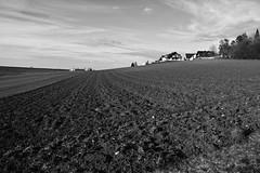 Acker (Dirk Stenzel) Tags: bw white black landscape sigma sw schwarzwald schwarz merrill weis dp1