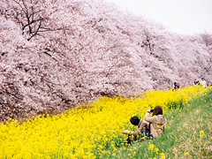 26320679460_8082893869_o (jennifer.ll) Tags: japan jp saitamaken kumagayashi