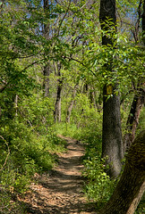 Trail (mdlmarkham) Tags: landscape flickr type blueridgeparkway hilights flickrall