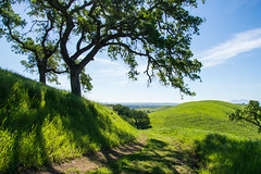 Trail - Rolling Hills Open Space Park - Solano County - California - 26 March 2016 (goatlockerguns) Tags: california park county trees usa mountains west tree nature coast oak open natural space unitedstatesofamerica vacaville hills trail bayarea eastbay solano rolling fairfield vaca