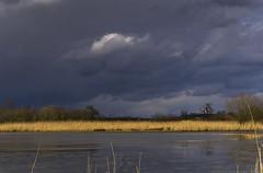 P3290006 2048 (Dirk Buse) Tags: germany de deutschland licht wasser outdoor natur wolken olympus pro nrw landschaft sonne zuiko deu nordrheinwestfalen mnster omd wanderung naturschutzgebiet rundgang em1 rieselfelder naturschutz 40150 4015028