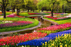 Serpent Garden (Giy dn tng, Thm tri sn, Sn nh) Tags: flowers trees reflection nature water japan creek tokyo spring colorful tulips lavender flowerfestival showakinen 2013 arcreyes