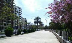 الكورنيش الغربي (nesreensahi) Tags: street flowers trees sky sun nature landscape syria siria سوريا syrie latakia اللاذقية سورية