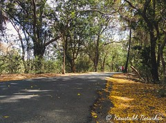 Sanjay Gandhi National Park (kaustubh.nerurkar) Tags: city travel trees urban nature nationalpark spring outdoor maharashtra ind