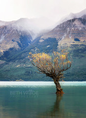 The Wind in the Willow (Beth Wode Photography) Tags: newzealand mist mountains beth willow nz lakewakatipu willowtree glenorchy theremarkables wode bethwode