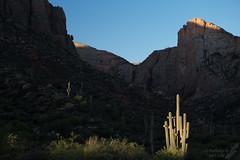 First Light (Squirrel Girl cbk) Tags: arizona april sunbeam firstlight saguaros superstitionmountains 2016 carnegieagigantea