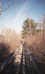 Candace Bonfiglio Photography (candacebonfiglio) Tags: color film nature kodak hiking massachusetts unitedstatesofamerica colorphotography trails beverly olympusxa filmphotography colorfilm olympusxa4 kodakporta kodakporta400
