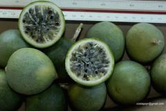 maracujaSilvestreDSC7137 (costapppr) Tags: passiflora passiflorasetaceamaracuj