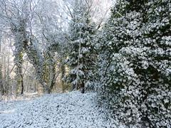 Snow Joke! (Thomas Kelly 48) Tags: snow wales lumix panasonic fz150