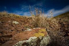 Australian outback colours (mernamora) Tags: moss rocks australia 4wd outback lichen arid prickles argadelles