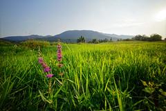 Grassland in Cerknica (marko.erman) Tags: flowers sun lake green grass landscape spring slovenia slovenija grassland jezero cerknica ultrewideangle