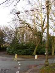 Queens Drive, Aigburth (Liverpool Suburbia) Tags: liverpool streetlight seftonpark merseyside wardle aigburth concreteutilities wardleliverpool
