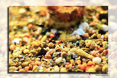 Colored Snail (Tajul Islam Hasif) Tags: sea seascape canon snail can kuwait morningwalk kuwai kuw kuwaitphotographers kuwaitbeach coloredsnail