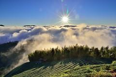 大崙山~茶園雲海~ Tea farm Sunset (Shang-fu Dai) Tags: sunset sky clouds landscape nikon taiwan 南投 formosa 台灣 日落 d800 雲海 cloudssea 銀杏森林 夕彩 af20mmf28d 武岫 大崙山觀光茶園