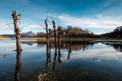 Lago di Campotosto, flooded dead trees (jimmomo) Tags: trees lake mountains alberi italia montagna abruzzo campotosto laghi