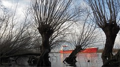 Willows (daaynos) Tags: trees sky water netherlands river boat ship riverside silhouettes maas willows oude hoeksewaard dehoekschewaard dehoeksewaard