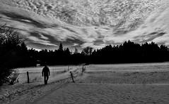 Chemin de rsilience... Way of resilience... #Darktable #FujiX-S1 (ImAges ImprObables) Tags: blackandwhite bw noiretblanc plateau hiver nb ciel neige nuage commune etienne arbre chemin contrejour homme drme traitement rhnealpes rsilience plandebaix  darktable fujixs1 plateauduvellan