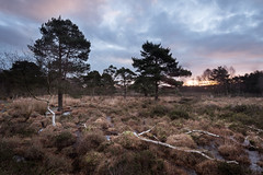 Skipwith Sunrise (17/1/16) (Draws_With_Light) Tags: camera winter david tree water sunrise canon woodland season landscape eos is mark yorkshire iii north hard places scene 09 lee nd vegetation fields 5d usm filters common grad f4 marshland northyorkshire 105mm skipwith polariser skipwithcommon ef1635mm hopley canoneos5dmarkiii lee09ndhardgrad davidhopley ef1635mmf4isusm lee105mmlandscapepolariser