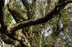 Sughero (Luca Rodriguez) Tags: trekking hiking tuscany toscana sanvincenzo cornia sughero valdicornia lucarodriguez anellodelcorbezzolo sentierodelcorbezzolo