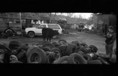 img344 (ahniton) Tags: 2 panorama film 35mm cow cows mju huntsville alabama olympus ii 400 stylus junkyard epic ultrafine