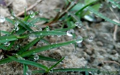 Droplet in grass