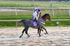 "2015-12-31 (9) r3 J.D. Acosta on #10 Skip the Punch (JLeeFleenor) Tags: photos photography md marylandracing marylandhorseracing equine laurelpark bay jockey جُوكِي ""赛马骑师"" jinete ""競馬騎手"" dżokej jocheu คนขี่ม้าแข่ง jóquei žokej kilparatsastaja rennreiter fantino ""경마 기수"" жокей jokey người horses thoroughbreds equestrian cheval cavalo cavallo cavall caballo pferd paard perd hevonen hest hestur cal kon konj beygir capall ceffyl cuddy yarraman faras alogo soos kuda uma pfeerd koin حصان кон 马 häst άλογο סוס घोड़ा 馬 koń лошадь birds geese avian jdacosta maryland"
