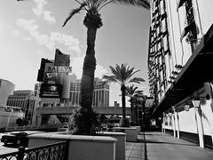Paris - Flamingo, Las Vegas (Andrew Milligan Sumo) Tags: lasvegas parisflamingo