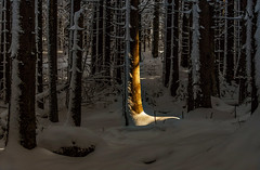 Un raggio di luce (marypink) Tags: snow forest germany bavaria baviera raylight gemania bayerischerwaldnationalpark nikkor80400mmf4556 nikond7200