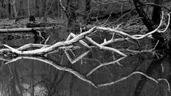 White Ribbed BW (Rob G Ski) Tags: bw reflection crozet 50mmf17