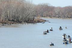 Walleye run on the Maumee (doug dibble) Tags: fish fishing toledo walleye maumee maumeeriver sidecutmetropark toledometroparks walleyerun