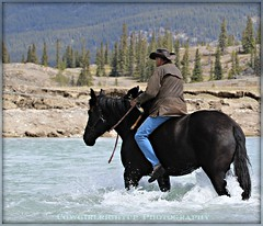 ~True Horseman~ (cowgirlrightup) Tags: rivercrossing percheron duckshoes truehorseman halterandleadrope