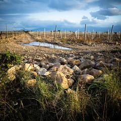 Moody. (kriXoff) Tags: color water clouds landscape vine gr nuages paysage roussillon ricoh vigne couleur languedoc villeneuve raho