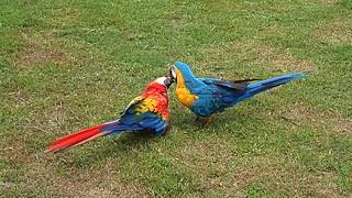 Love Birds but ....   P2272035