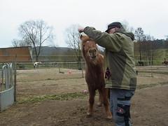 R0026478 (joachimelbing) Tags: mit lustig yoyo spielen pferden yoyogame