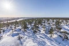 Martimoaapa (Juho Holmi) Tags: martimoaapa martimo swamp mire reserve suo nature aapa suomi finland finnland finlandia beautiful skiing ski winter snow lumi simo kemi keminmaa lappi lapland pohjoinen pohjoissuomi north northern europe eurooppa finnish wilderness hut autiotupa pentax k5 k 5 sigma 1020mm f35 35 1020 10 20 recreational recreation luonnon suojelu alue luonnonsuojelualue sports talvi sn ricoh ex dc hsm thisisfinland visitfinland