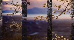 Above & Below (Karen McQuilkin) Tags: abstract mountains tree nature backlight islands utah triptych pano dream greatsaltlake zen dreamy abovebelow welcomingspring theawardtree karenmcquilkin
