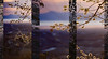 Above & Below (Karen McQuilkin) Tags: abstract mountains tree nature backlight islands utah triptych pano dream greatsaltlake zen dreamy abovebelow welcomingspring theawardtree karenmcquilkin
