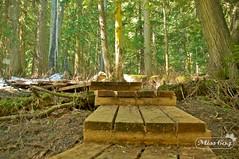 The Ancient Forest (miss604) Tags: park trees forest northernbc princegeorge ancientforest explorebc