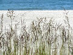jastrzebia gora grasses of june (kexi) Tags: blue shadow sea wallpaper beach water grass june sand samsung poland polska balticsea baltic polen polonia pomerania pologne 2015 instantfave jastrzebiagora wb690