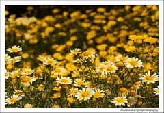 aria di primavera (Gianluca Longu) Tags: life sardegna italy macro canon reflex italia sardinia natura fiori colori prato dettaglio naturalmente