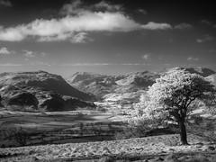 Matterdale IR (Dylan Nardini) Tags: uk trees light england sky white black clouds ir mono landscapes nikon lakedistrict infrared converted ullswater d80