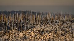 _MAK4841_2016_02_27_1-640 Sek. bei f - 5,6_300 mm_ISO 250 (Markus Kolar braucht kein Photoshop...aber Licht) Tags: schnee nationalpark landschaft wandern bayerischerwald 2016 lusen fotoblosn httpmarkuskolarblogspotde pentaxks2