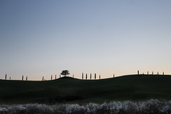 Lady sings the Blues (agmarcon) Tags: tuscany cypresses cretesenesi