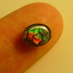 #ammolite #ammolites #ammolitestone #ammoliteworld #ammolitegems #jewelrygram #jewelrydesign #pendantsforsale #pendants # #handmadejewelry #fashion #fashionable #etsy #ammonite #ammonites #jewelry #jewellery #jewellerydesign #handmadejewellery #jewe (The Ammolite) Tags: square squareformat ammolite iphoneography instagramapp