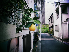 R0011460 (bosscoff) Tags: japan tokyo alley ricoh sss   grd2