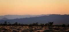 Mojave Ranges (wyojones) Tags: california sunset mountains joshuatree ranges np preserve ridges cindercones mojavedesert cima mojavenationalpreserve cedarcanyonroad nationalparksystem wyojones marlmountains