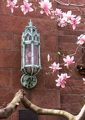 A bronze Gothic lantern, the Church of the Ascension (1841), Greenwich Village, New York City (Spencer Means) Tags: manhattan lantern lamp light gothic bronze church neogothic gothicrevival ascension greenwichvillage newyork nyc ny city fifth 5th avenue spring brick flower magnolia pink