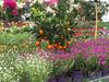 IMG_1156_D (from_the_sky) Tags: garden center strümpfelbach